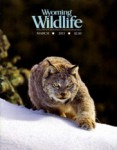 Wyoming Wildlife Magazine - 2013-03-01