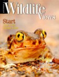 Arizona Wildlife Views Magazine - 2013-05-01