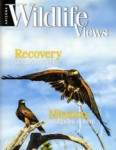 Arizona Wildlife Views Magazine - 2014-03-01