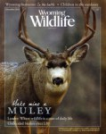 Wyoming Wildlife Magazine - 2013-12-01