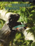 Arizona Wildlife Views Magazine - 2010-01-01