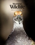 Wyoming Wildlife Magazine - 2013-05-01